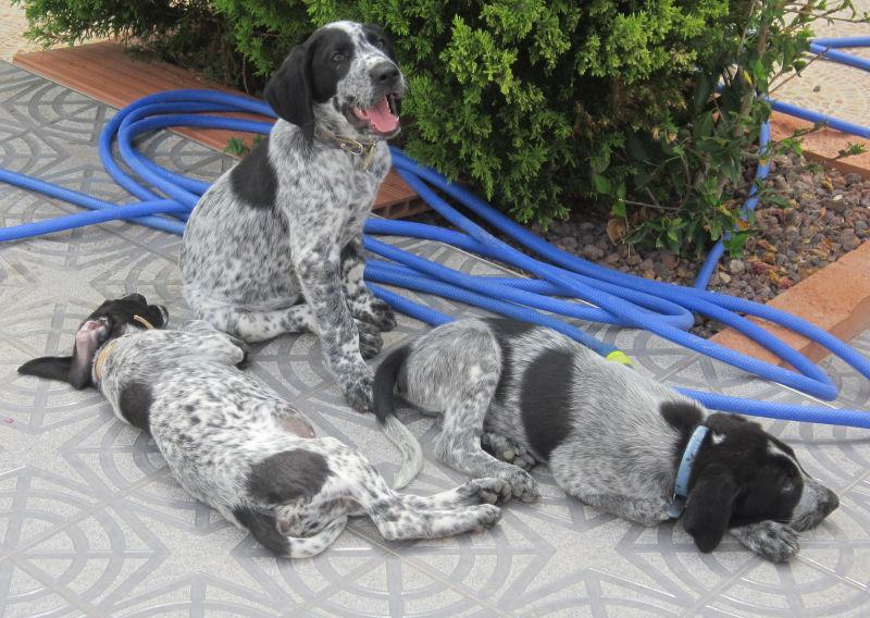 Wieviel ist ein kleines Hundeleben wert? – Namenspaten für 5 Hundejungs gefunden, weitere Spender gesucht... 18655204iu