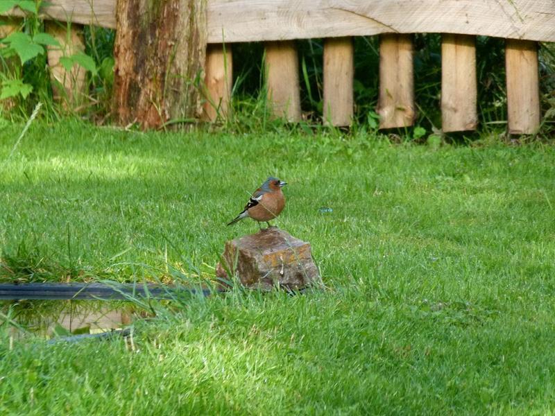 Vögel 18665067sd