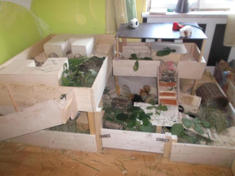 eigenbau umbau meerschweinchen haltung. Black Bedroom Furniture Sets. Home Design Ideas