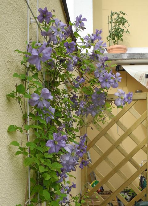 Minig rtchen 2014 teil 3 sommer seite 11 for Gartengestaltung 150 qm