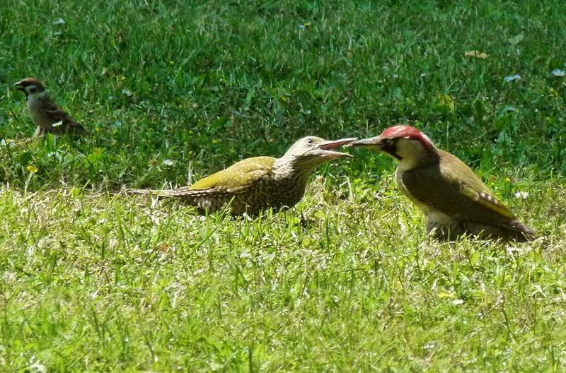 Vögel 18823053rh