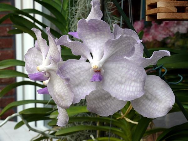 orchidee und wie weiter seite 60 pflanzenfragen mein. Black Bedroom Furniture Sets. Home Design Ideas
