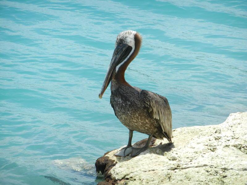 Aruba Durch Oranjestad Und Zu Den Echsen 06 04 2014