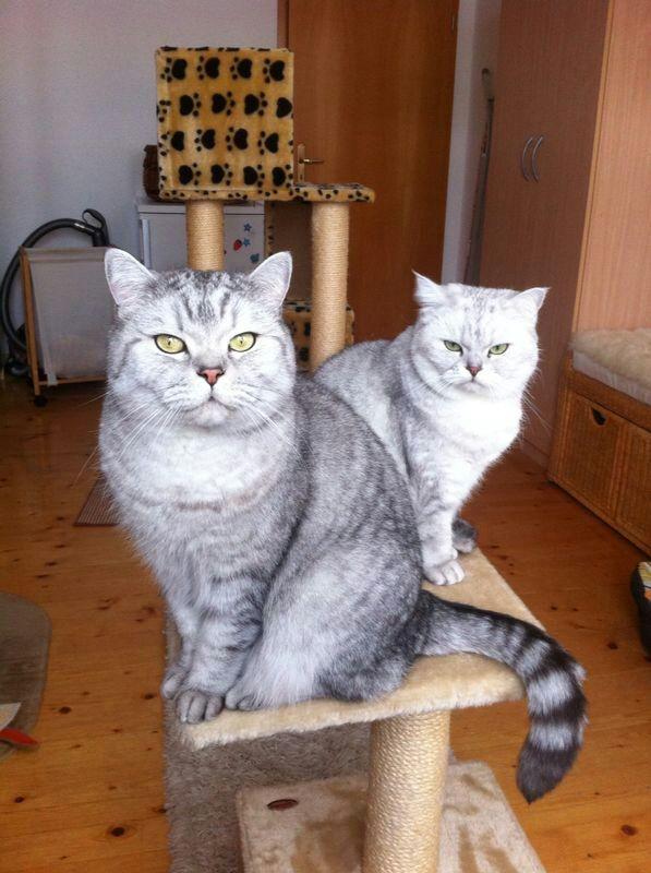 katzen forum nachbar bekommt morgen zwei katzen. Black Bedroom Furniture Sets. Home Design Ideas
