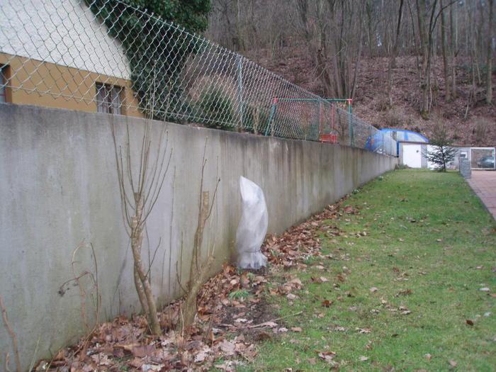 Mauer versch nern mein sch ner garten forum - Betonwand garten ...