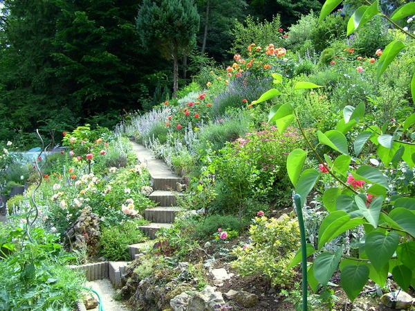 Bodendecker auf b schung pflanzen seite 3 garten for Garten randgestaltung