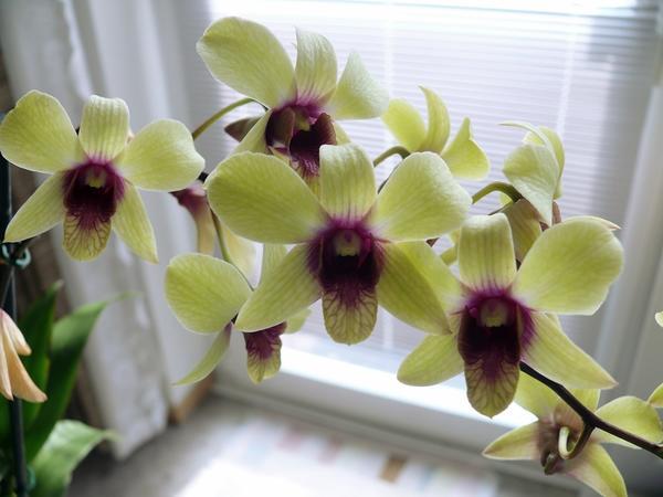 orchidee und wie weiter page 72 mein sch ner garten forum. Black Bedroom Furniture Sets. Home Design Ideas