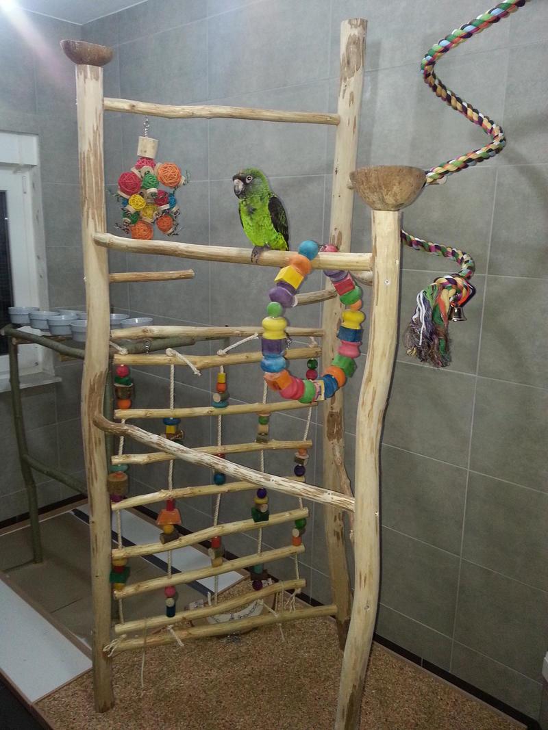 Die renovierung unseres vogelzimmers für unser