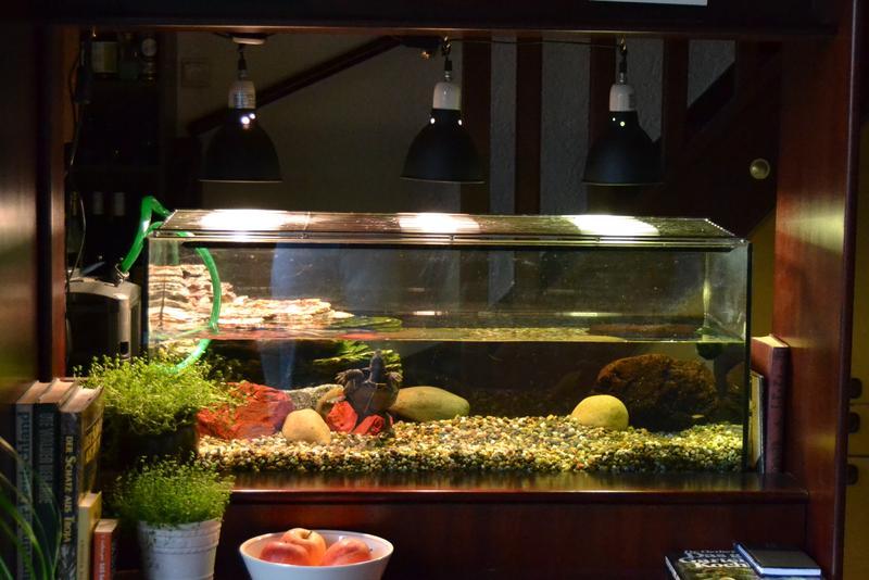 schildkr ten aquarium guppys und was man alles falsch machen kann. Black Bedroom Furniture Sets. Home Design Ideas