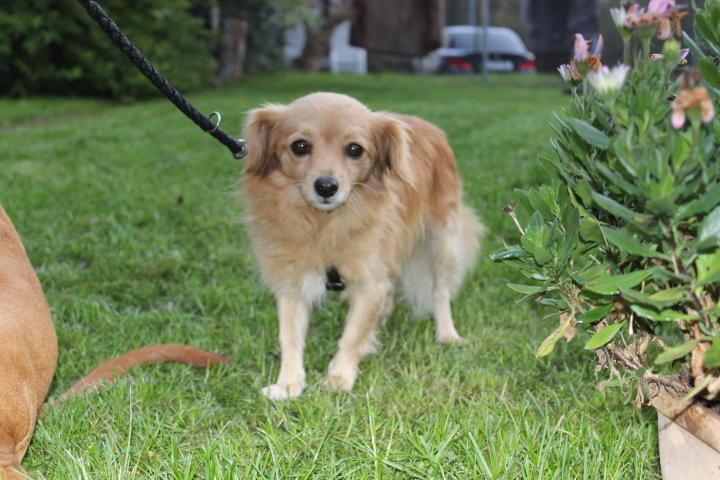 Goldie, ein wunderbarer Gefährte 19974878jw