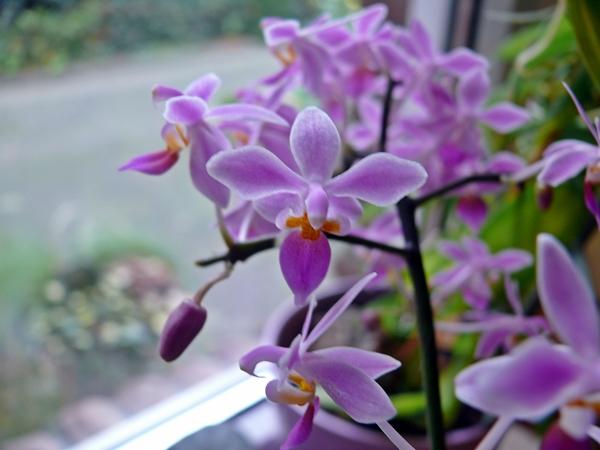 orchidee und wie weiter page 75 mein sch ner garten forum. Black Bedroom Furniture Sets. Home Design Ideas
