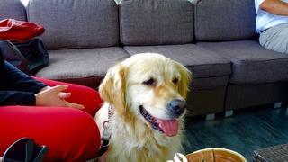 Nessy hat ein neues Zuhause gefunden 20023725hw