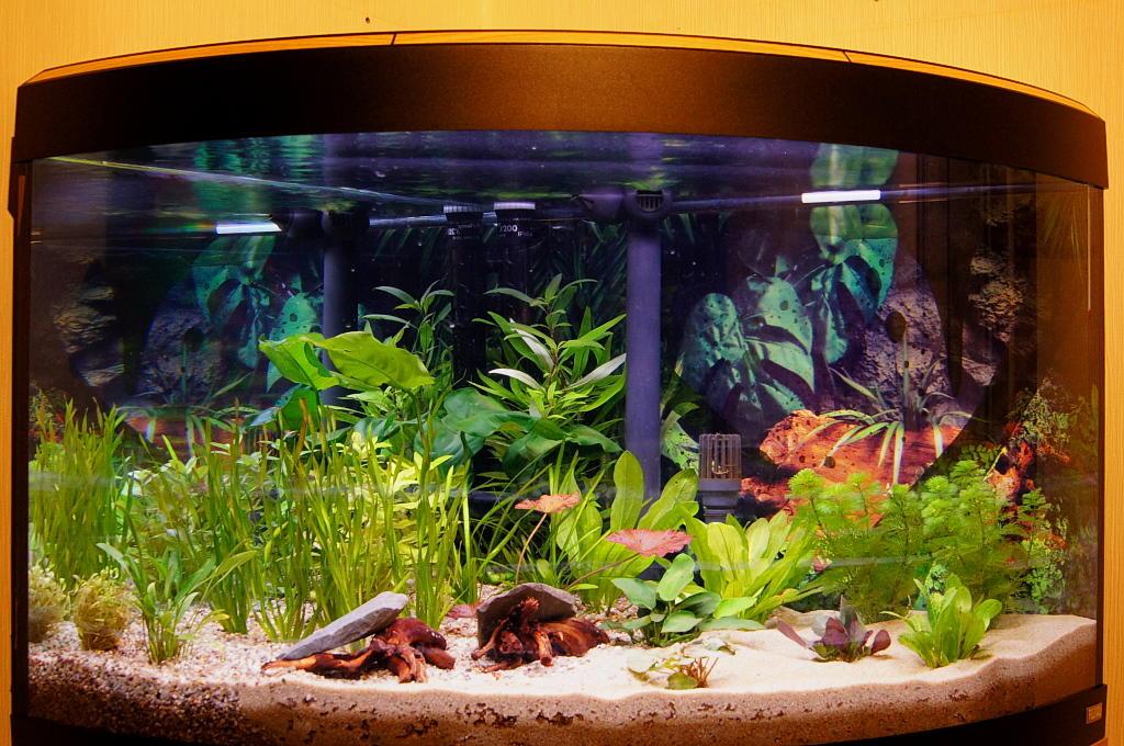 Besatz oberer bereich 190l aquarium mit skalar und panda for Skalar aquarium