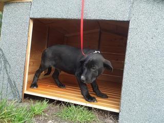 Snoopy hat ein neues Zuhause gefunden 20110049qq