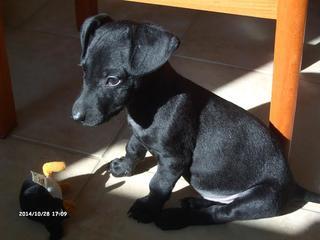 Zizi hat ein neues Zuhause gefunden 20117902ea