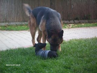 Zizi hat ein neues Zuhause gefunden 20117905dq