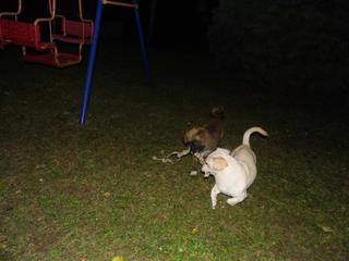 Clyde hat ein neues Zuhause gefunden 20118350qq