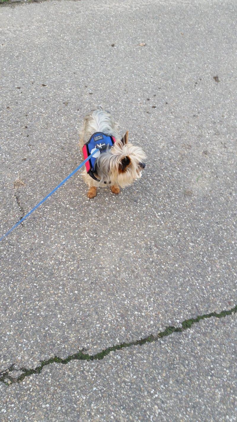 Milli ist zu Hause angekommen - Seite 7 20143303hy