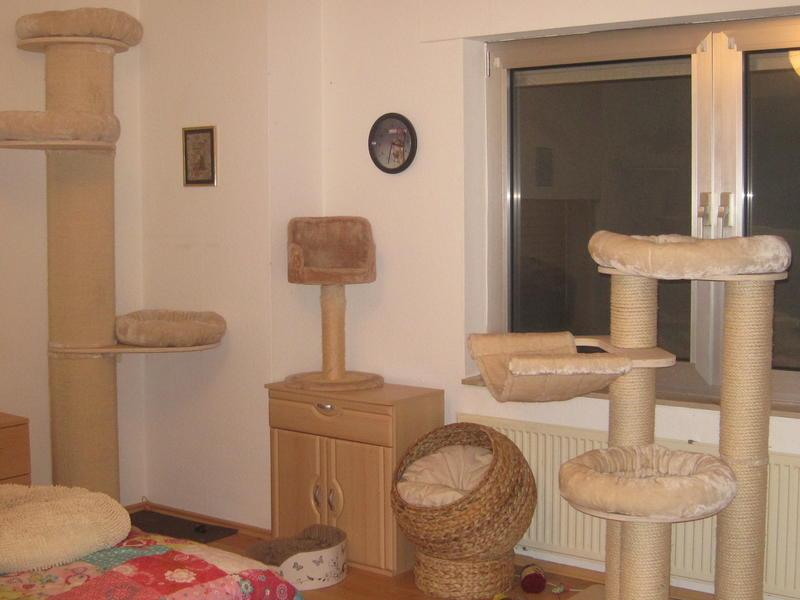 katzen forum kratzbaum natural paradise. Black Bedroom Furniture Sets. Home Design Ideas