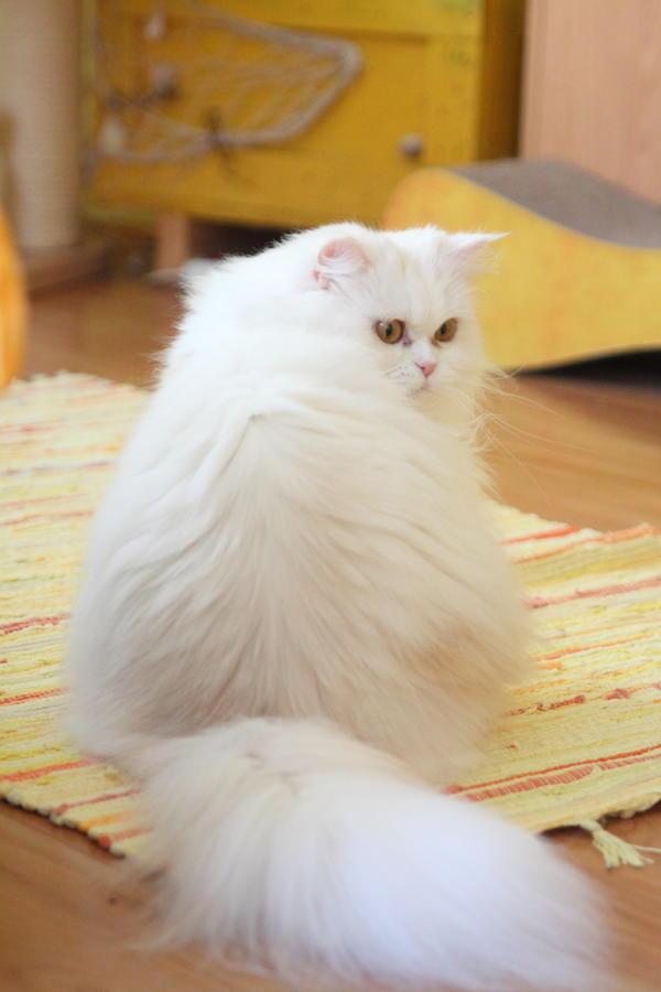 Beste Katzen Färbung Seite Zeitgenössisch - Beispiel Wiederaufnahme ...