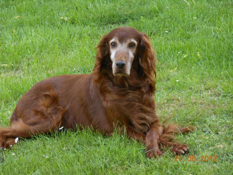 Herzliche Grüße von den HPiN Hunden Regina-jetzt Ina-, Baco, Flora und Luna  20407102wv