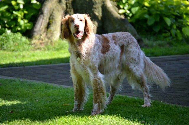 Herzliche Grüße von den HPiN Hunden Regina-jetzt Ina-, Baco, Flora und Luna  20407232wq