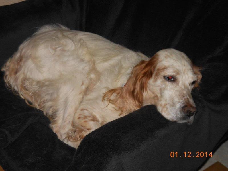 Herzliche Grüße von den HPiN Hunden Regina-jetzt Ina-, Baco, Flora und Luna  20407301hr