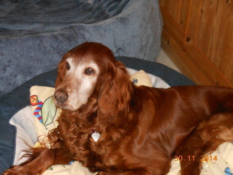 Herzliche Grüße von den HPiN Hunden Regina-jetzt Ina-, Baco, Flora und Luna  20407303bb