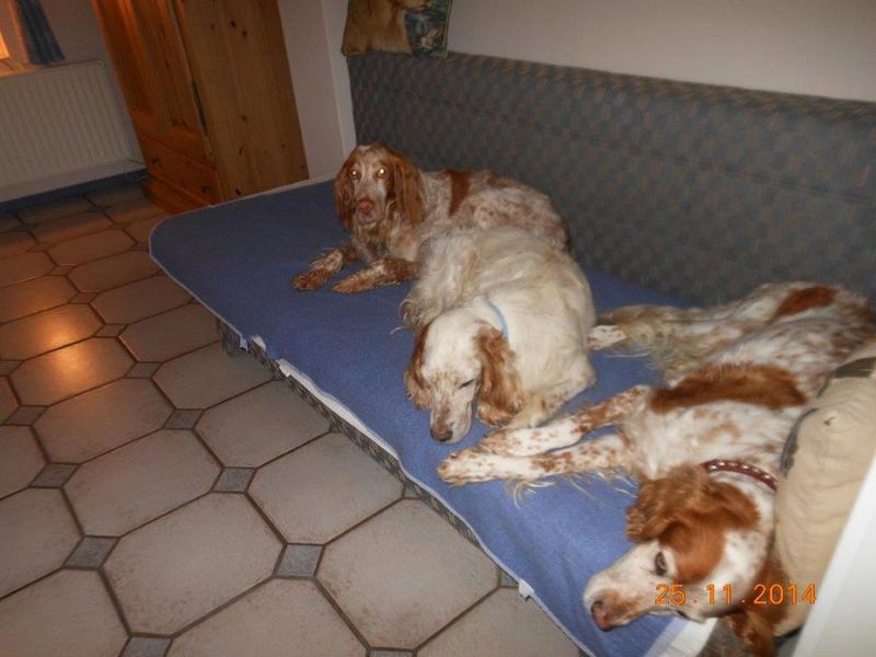 Herzliche Grüße von den HPiN Hunden Regina-jetzt Ina-, Baco, Flora und Luna  20407304gt