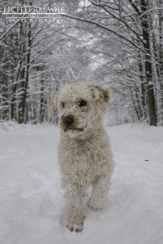 Let it snow! 20533584et