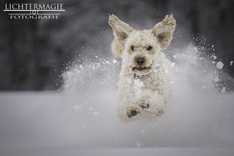 Let it snow! 20533592in