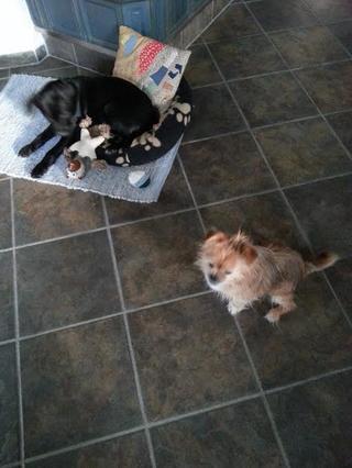 Snoopy hat ein neues Zuhause gefunden 20549584we