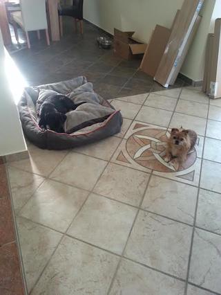 Snoopy hat ein neues Zuhause gefunden 20549585kq