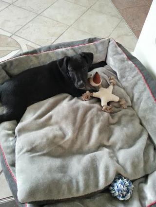 Snoopy hat ein neues Zuhause gefunden 20549592ne