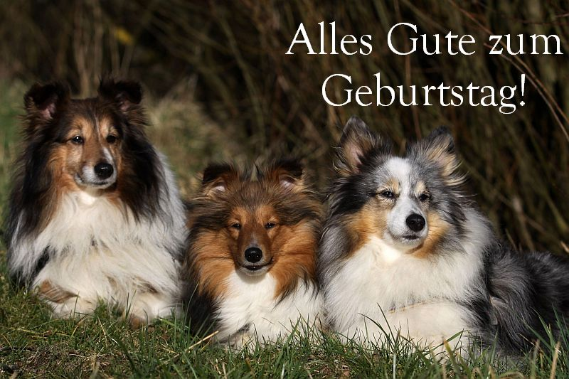 An den Beitrag angehängtes Bild: http://up.picr.de/20556319zs.jpg