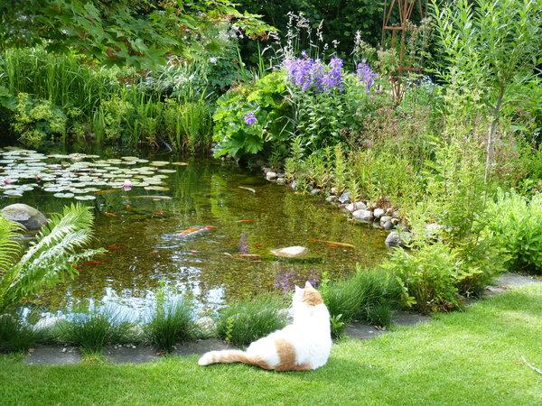Gartenteichneuanlage ohne diese kapilarsperrrenwulst for Teich fische ohne filter
