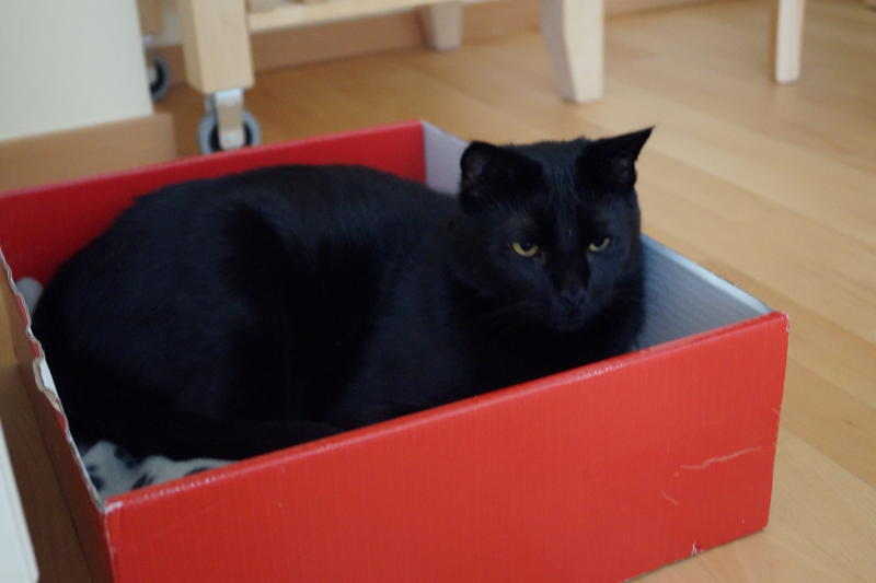 warum stehen katzen so auf kartons seite 9 katzen forum. Black Bedroom Furniture Sets. Home Design Ideas