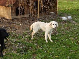 Laiko hat ein neues Zuhause gefunden 20579818zd