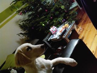 Laiko hat ein neues Zuhause gefunden 20580126no