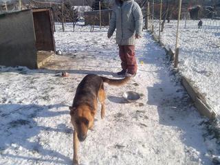 Yuli, Schäferhündin, geb. ca. März 2011 20589259mb