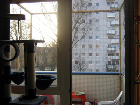 Aussichtsplateaus Fur Balkon Ideen Gesucht Katzen Forum