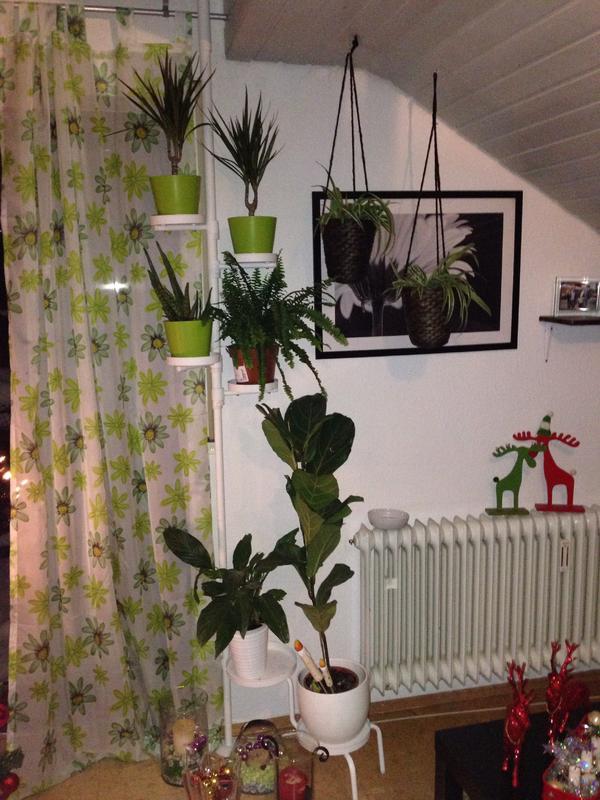 katze kratzt t rdichtung kaputt seite 2 katzen forum. Black Bedroom Furniture Sets. Home Design Ideas