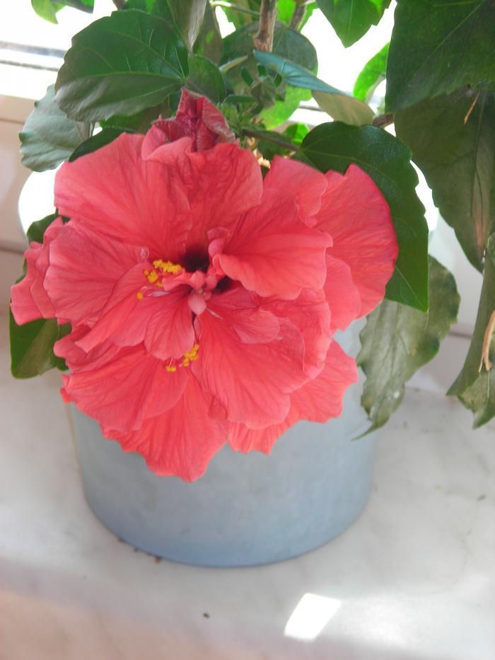 Zimmerpflanze gesucht mein sch ner garten forum - Zimmerpflanze sonnig ...