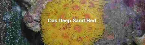 Das-Deep-Sand-Bed