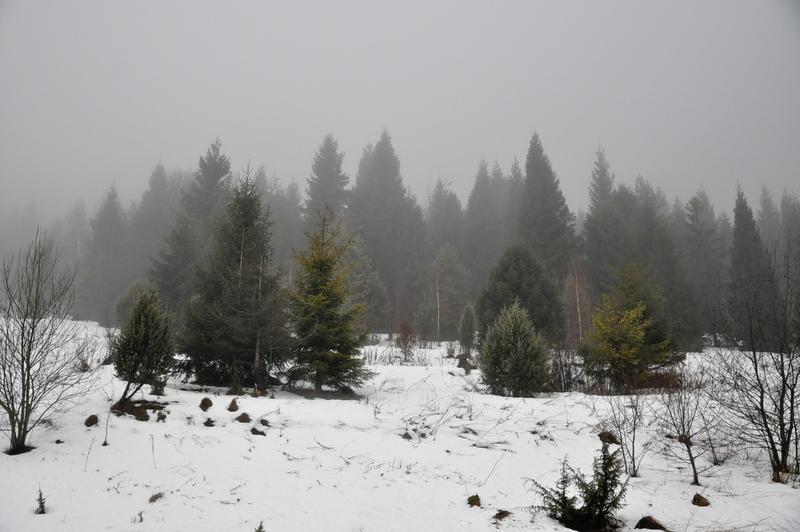 Karpat Niva Winter Tour 2015 20819340rs