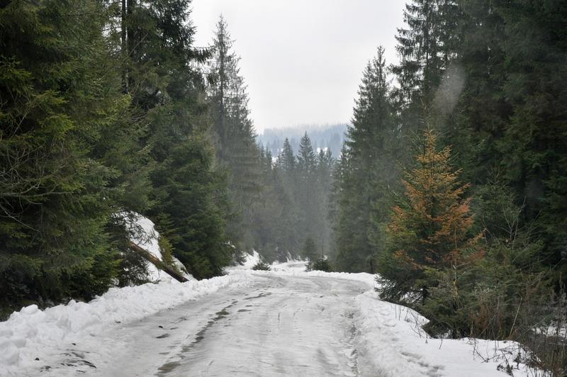 Karpat Niva Winter Tour 2015 20819793rt