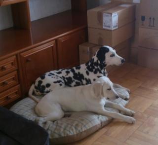 Lilli hat ein neues Zuhause gefunden 20833721bu
