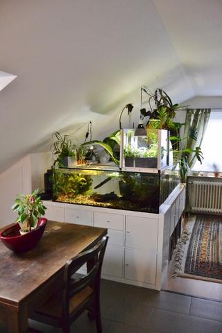 lucky reptile bright sun turtle f r h ckerschildkr te seite 2. Black Bedroom Furniture Sets. Home Design Ideas