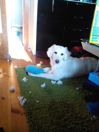 Laiko hat ein neues Zuhause gefunden 21042979lt