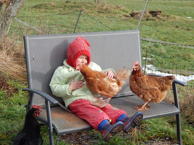 Hühnerhaltung Im Garten hühner im garten page 19 mein schöner garten forum